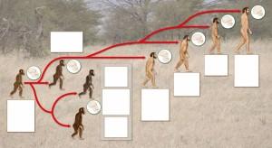 14 RCS BigBang Storia: Evoluzione dell'uomo
